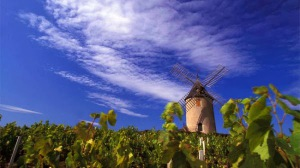 cru-beaujolais-moulin-a-vent-600x336