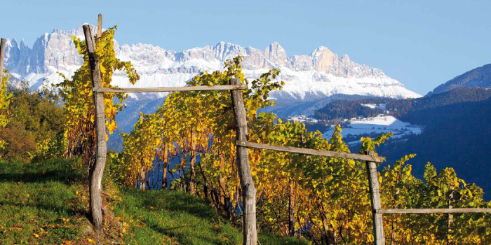 alto-adige-mountain-vineyard