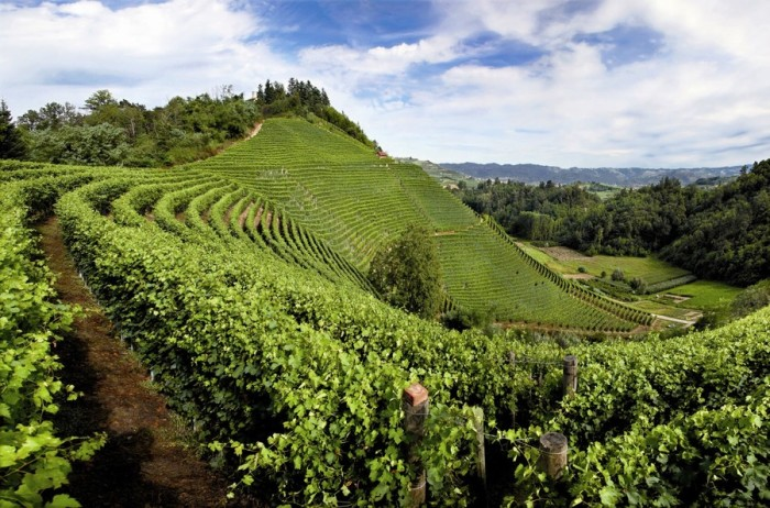 barolo-vineyard-landscape