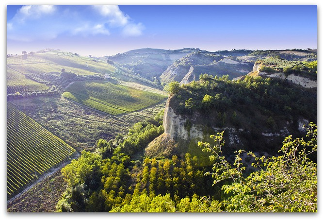 vineyards_Le_Marche-italy