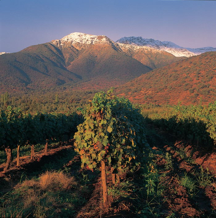 vineyards-of-santa-alicia