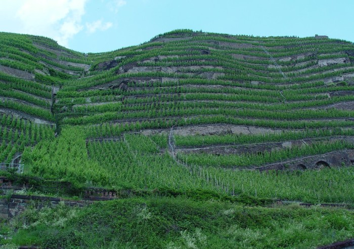 moselle_vineyard_a