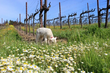 wpid-california-wine-country-spring.jpg