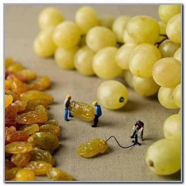 how-grapes-are-made-5471f043e427e