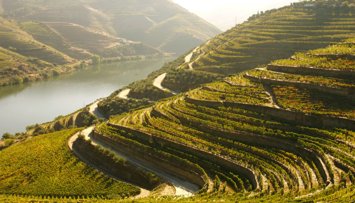 terroir-douro