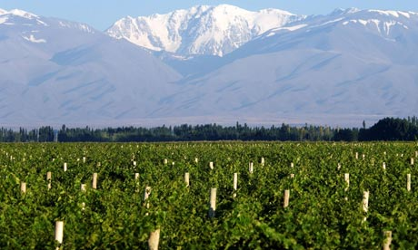 Mendoza vineyards with Andes