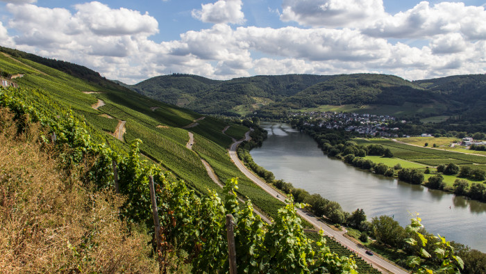 vineyard-mosel-valley