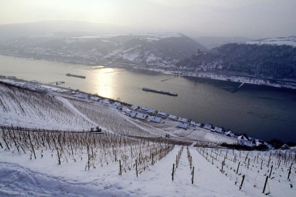 Rheingau_winter_snow_vineyard