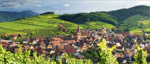 Alsace_Wines