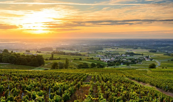 Sunrise at Beaujolais vineyard